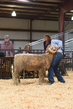 18HCD-BreedingSheep-5542.jpg