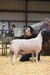 18HCD-BreedingSheep-5544.jpg