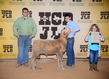 18HCD-BreedingSheep-7206.jpg
