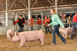 18JW-BreedingGilts-5875.jpg
