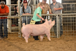 18JW-BreedingGilts-5877.jpg
