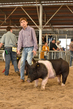 18JW-BreedingGilts-5942.jpg