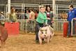 18JW-BreedingGilts-6126.jpg
