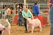 18JW-BreedingGilts-6127.jpg