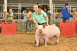 18JW-BreedingGilts-6128.jpg