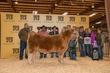 19HCC-CattleBD-7892.jpg