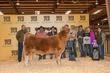 19HCC-CattleBD-7894.jpg