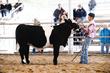 19JW-CattleHS-3635.jpg
