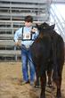 19JW-CattleHS-3939(1).jpg