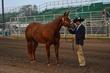 19JW-Horse-5190(1).jpg