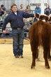 19KC_Breeding CattleHS_2081.jpg