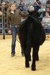 19KC_Breeding CattleHS_2084.jpg