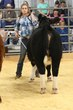 19KC_Breeding CattleHS_2086.jpg