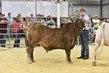 19KC_CattleHS_3005.jpg
