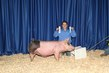 19KK_SwineBD_7091(1).jpg
