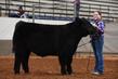 19NC-Cattle-8740.jpg