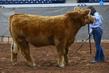 19NC-Cattle-8742.jpg