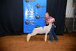 19NC-Lambs-7335.jpg