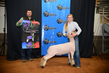 19NC-Lambs-7338.jpg