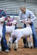 19NC-Lambs-8301.jpg