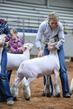 19NC-Lambs-8302.jpg