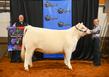 19NC-cattle-7381.jpg