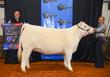 19NC-cattle-7385.jpg