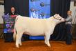 19NC-cattle-7386.jpg