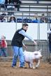 19NC-swine-9167.jpg