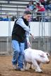 19NC-swine-9169.jpg