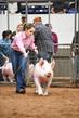 19NC-swine-9320.jpg