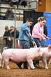 19NC-swine-9321.jpg