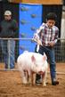 19NC-swine-9323.jpg