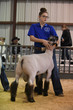 19SA-BreedingSheep-4429.jpg