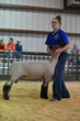 19SA-BreedingSheep-4432.jpg