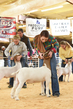 19SC-Goats-7713.jpg