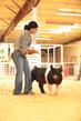 19SC-Swine-5295(1).jpg