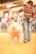 19SC-Swine-5323.jpg