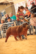 19SC-Swine-5399.jpg
