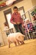 19SC-Swine-5662(1).jpg