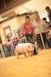 19SC-Swine-5663.jpg
