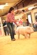 19SC-Swine-5666(1).jpg