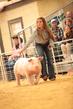 19SC-Swine-5668.jpg