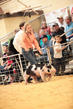 19SC-Swine-5724.jpg