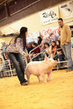 19SC-Swine-5866.jpg