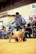 19SC-Swine-5911.jpg