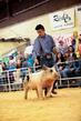 19SC-Swine-5912.jpg