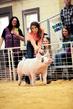 19SC-Swine-5913.jpg