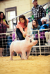 19SC-Swine-5914.jpg