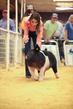 19SC-Swine-6010.jpg